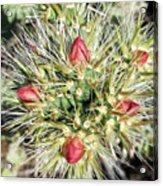 Prickly Pleasure Acrylic Print