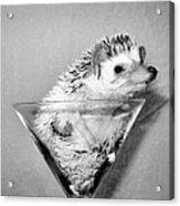 Prickly Toasting Acrylic Print