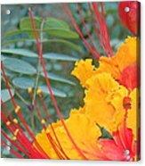 Pride Of Barbados Photo Acrylic Print