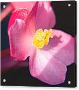 Bright Flower In Your Life Acrylic Print