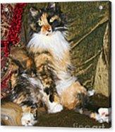 Princess Miss Gizzie By Diana Sainz Acrylic Print