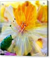 Prisms Of Nature - Meditation - Rhododendron  Acrylic Print