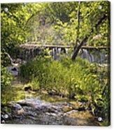 Pristine Forest Stream Acrylic Print
