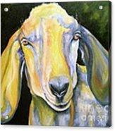 Prize Nubian Goat Acrylic Print