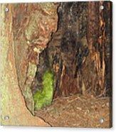 Profile Face In Tree Acrylic Print