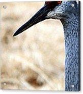 Profile Of A Sand Hill Crane Acrylic Print