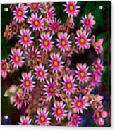 Promising Pink Petals Abstract Garden Art By Omaste Witkowski Acrylic Print