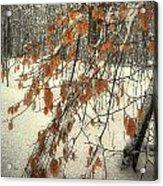 Prospect Park Winter Scene Acrylic Print