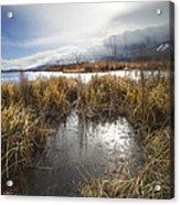 Protected Wetlands Acrylic Print
