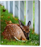 Protecting Our Heros Acrylic Print