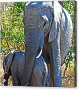 Protective Mother Elephant In Kruger National Park-south Africa Acrylic Print