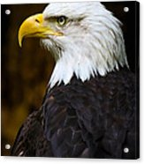 Proud Eagle Profile Acrylic Print by Athena Mckinzie