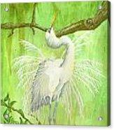 Proud Egret Acrylic Print