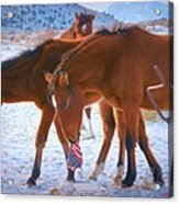 Proud To Be An American Icon Of The West Acrylic Print