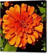 Proven Winners Flower Acrylic Print