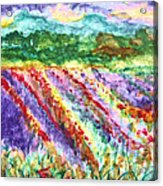 Provence France Field Of Flowers Acrylic Print