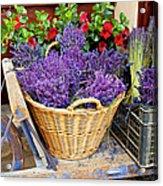 Provence Lavender Acrylic Print
