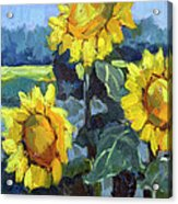 Provence Sunflower Trio Acrylic Print