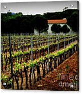 Provence Vineyard Acrylic Print