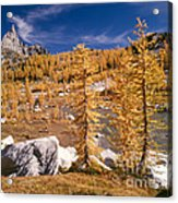Prusik Peak Above Larch Grove Acrylic Print