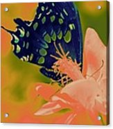 Psychadelic Butterflys Acrylic Print