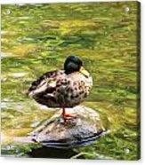 Psychedelic Duck  Acrylic Print