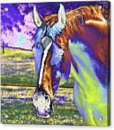 Psychedelic Horse Acrylic Print