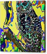 Psychedelic Owl Acrylic Print