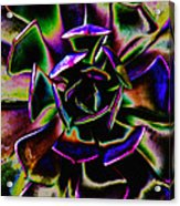 Psychedelic Rubber Plant Acrylic Print