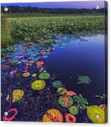 Psychedelic Shore - Great Meadows Nwr Acrylic Print by Sylvia J Zarco