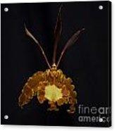 Psychopsis Mariposa  4446 Acrylic Print