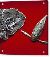 Pterichthyodes, Fish Fossil Acrylic Print