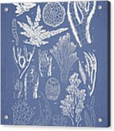 Pterosiphonia Fibrillosa Acrylic Print