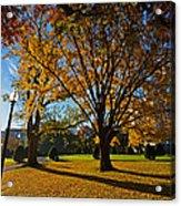 Public Garden Fall Tree Acrylic Print