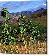 Puerto Rico Cayey Mountains Near Salinas Acrylic Print