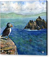 Puffin At Skellig Island Ireland Acrylic Print
