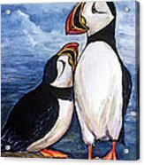 Puffin Friends  Acrylic Print