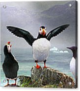 Puffin Pano Acrylic Print by R christopher Vest