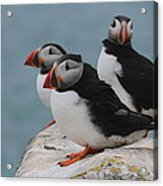 Puffins  Acrylic Print by Peter Skelton