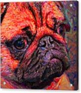 Pug 20130126v2 Acrylic Print