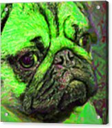 Pug 20130126v4 Acrylic Print by Wingsdomain Art and Photography