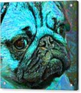 Pug 20130126v5 Acrylic Print by Wingsdomain Art and Photography