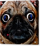 Pug Dog - Electric Acrylic Print by Wingsdomain Art and Photography