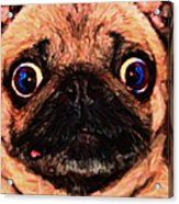 Pug Dog - Painterly Acrylic Print by Wingsdomain Art and Photography