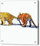 Pulling A Tiger By The Tail Acrylic Print