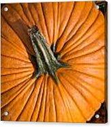 Pumpkin Aerial View Acrylic Print