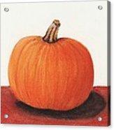 Pumpkin Acrylic Print by Anastasiya Malakhova
