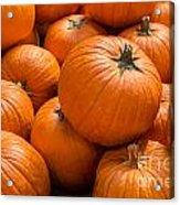 Pumpkin Background Acrylic Print