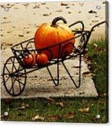 Pumpkin Barrow Acrylic Print