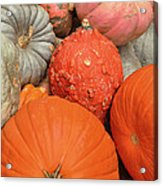 Pumpkin Happy Acrylic Print